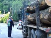 Cherestea confiscată la Câmpia Turzii
