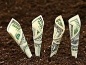 APIA Cluj: se pun în plată subvenţiile din 2015, se iau dosare pentru anul 2016