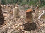 Polițiștii clujeni au confiscat o pădure tăiată