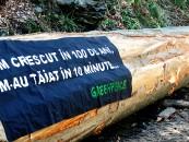 Greenpeace România lansează platforma online salvezpadurea.ro