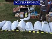 Cultură de canabis descoperită de polițiștii clujeni (Video)