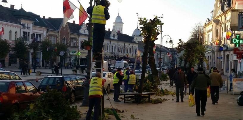 Asociațiile de locatari pot solicita curățarea arborilor