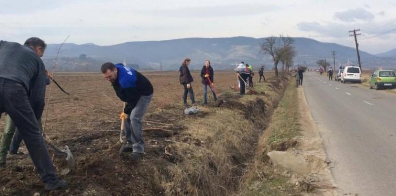 T9 a finalizat campania de plantare de arbori la Moldovenești