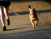Cum alergi cu câinele tău. Recomandările veterinarilor