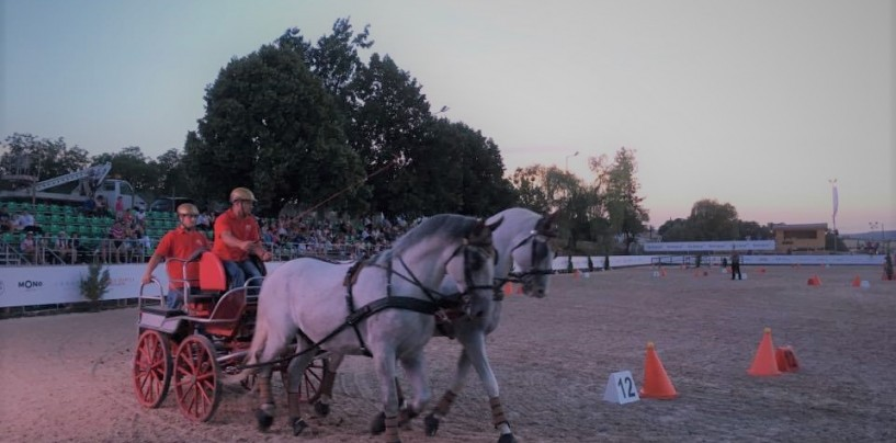 Salina Equines Trophy:  Concursul de atelaje a fost  atracția celei de- a doua zi