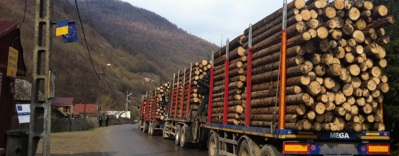 Clujul, în top trei la volumul de lemn tăiat din păduri în anul 2016