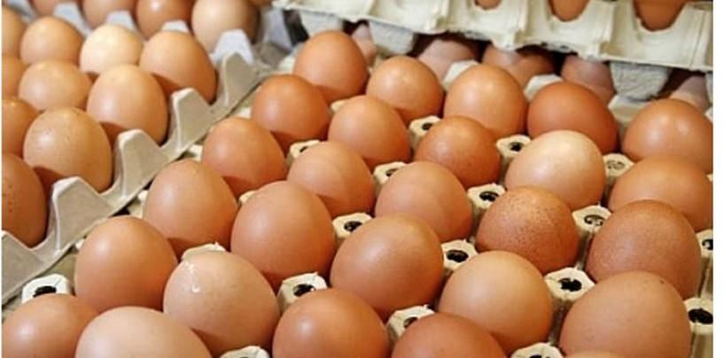 Ouăle din România sunt sănătoase, ouăle din Germania sunt contaminate