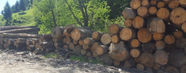Mii de metri cubi de lemn confiscați de Garda Forestieră Cluj
