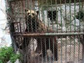 Ursii de la Zoo, mutați la Târgu Mureș