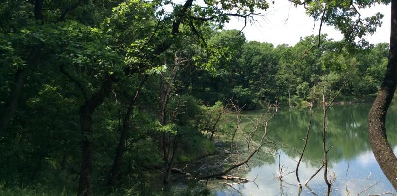 Garda Forestieră: Primăria Turda obligata să ceară schimbarea de destinație a pădurii de la Lacul Tarzan