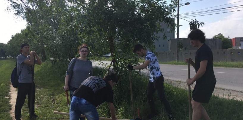Voluntarii CRD pregătesc acțiunea de înfrumusețare a malului Arieșului