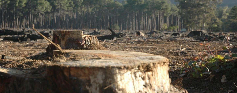 USR acuză Guvernul Dăncilă că dă liber la defrișări în Apuseni