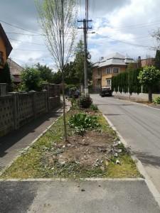 Nu toți copacii de pe str. Crinilor ies la numărătoare iar deșeurile industriale îi supără pe oameni