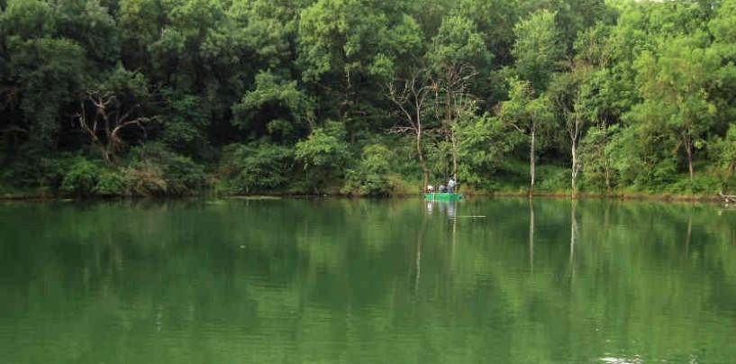 Consiliul Local Turda nu a respectat legea. Schimbarea de categorie a pădurii din Băi trebuia aprobată de minister