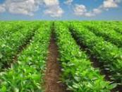 Agricultura în judeţul Cluj  se pr�buşeşte