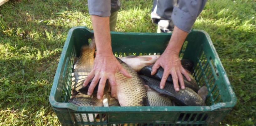 Complexul piscicol Trei Lacuri în carantină.Boala depistată se transmite rar la om