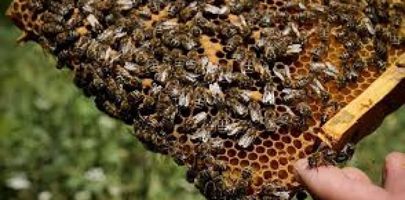 Guvernul a suplimentat sprijinul financiar acordat apicultorilor