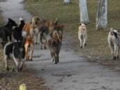 Municipiul Turda, obligat să plătească despăgubiri pentru găinile ucise de câinii comunitari
