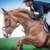 Salina Equines Spring Competition: Cei mai frumoși cai din România, în concurs la Turda