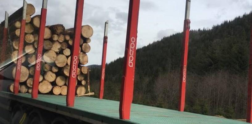 Ocolul Silvic Valea Ierii nu poate administra pădurea Turzii. Ministerul Pădurilor a confirmat că srl-ul n-are statut de regie autonomă