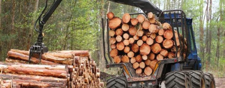 Procurorii au cerut începerea unei cercetări penale privitoare la pădurea Turzii