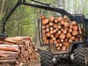 USR acuză Poliția și un ministru PSD de favorizare a tâlharilor care distrug pădurile României