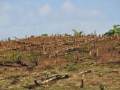 Inițiativa USR împotriva tăierilor ilegale de păduri a strâns peste 20.000 de semnături de susținere
