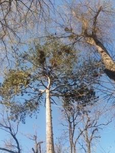 Locuitorii din Turda Nouă se plâng că parcul a fost neglijat de adminsitrația primarului Cristian Matei