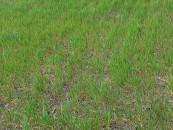 Avertisment privind seceta puternică din România. Se estimează o pierdere a producției de până la 50%