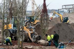 Copacii maturi sunt relocati și în Europa, prin proceduri speciale