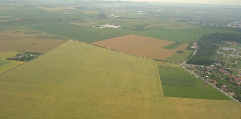Ziua Grâului. Cercetătorii Stațiunii Agricole vorbesc despre noile soiuri omologate