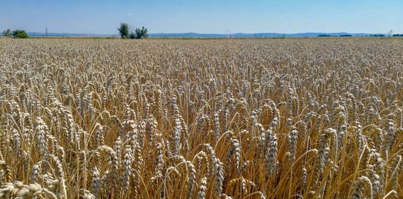 Naturevo a aplicat soluții integrate pentru cultura grâului în ferma Agroturdean de la Bădeni