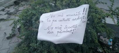 """Protest inedit împotriva tăierilor de arbori . """"Nu mă scoateți din pământ"""""""